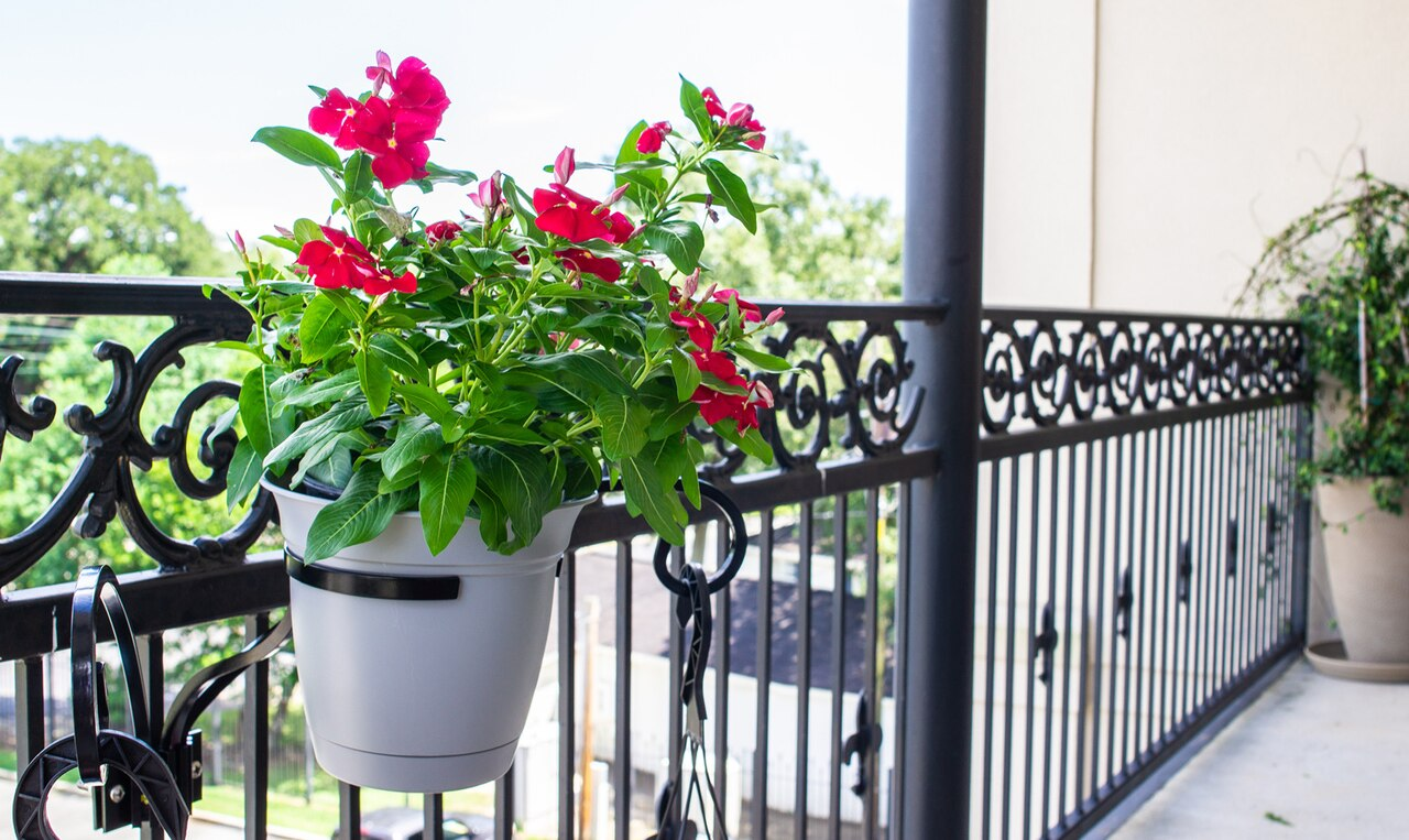 The Plant Tree's 3-Plant Bracket Pot Holder on railing